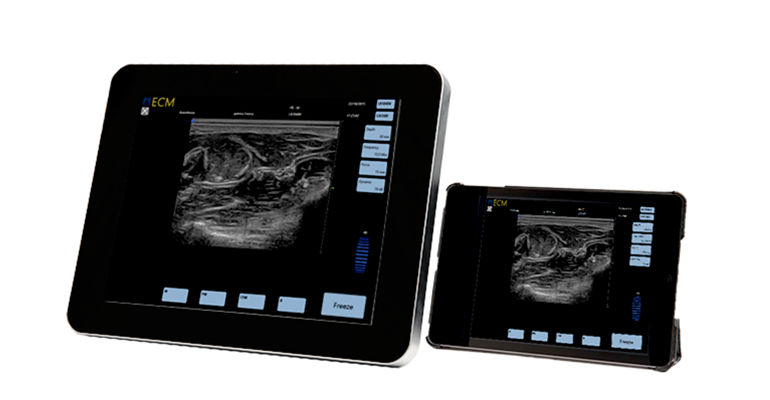 Equine ultrasound EXAPad and EXAPad mini